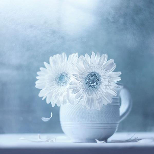 Bộ ảnh vũ điệu loài hoa F5-14510