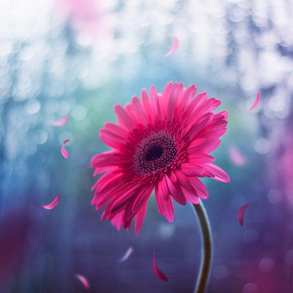 Bộ ảnh vũ điệu loài hoa F6-14510