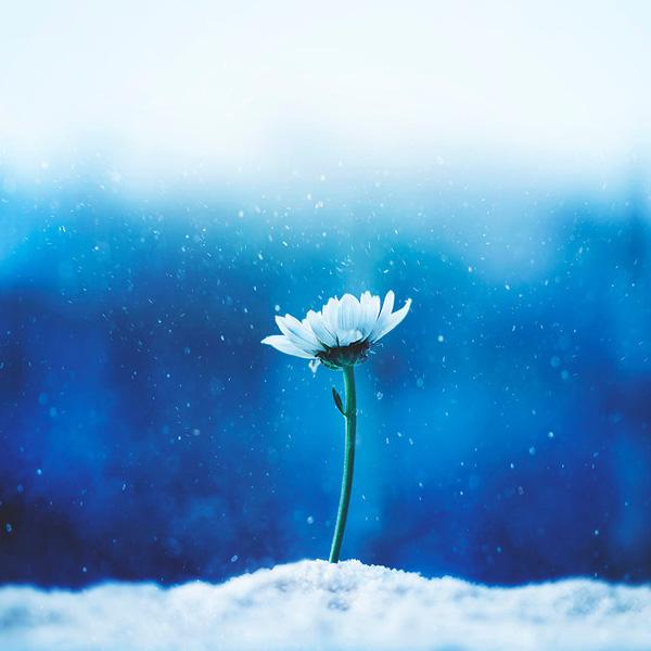 Bộ ảnh vũ điệu loài hoa F8-14510