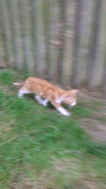 SOS 4 chatons (Béthune 62) Sans-t10