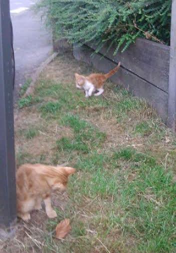 SOS 4 chatons (Béthune 62) Sans-t11