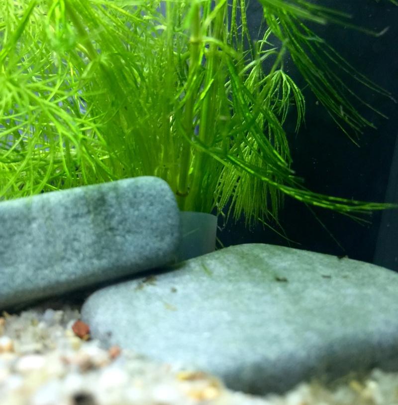 Plantes dans mon gravier quartz Image48