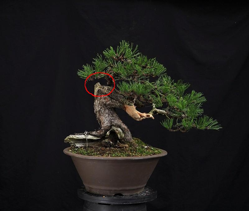 OOPS!!! I STYLED A BONSAI !!! 22-9-210