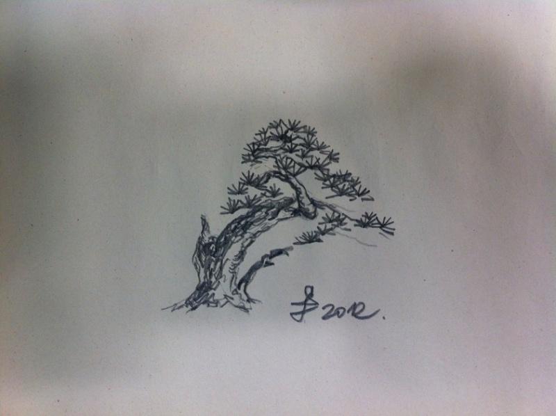 Pinus sylvestris - owner Mr. Homola (SK) Dsc07424