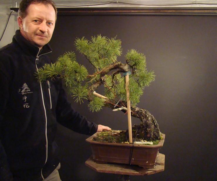 "Pinus sylvestris 2005 - ""Transformations "" Od_1110"