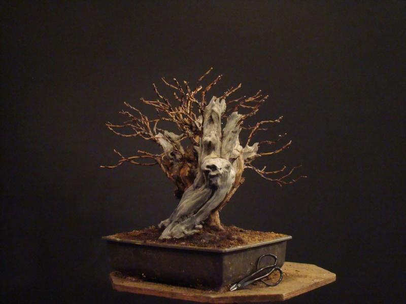 Physocarpus opulifolius Odl_0011