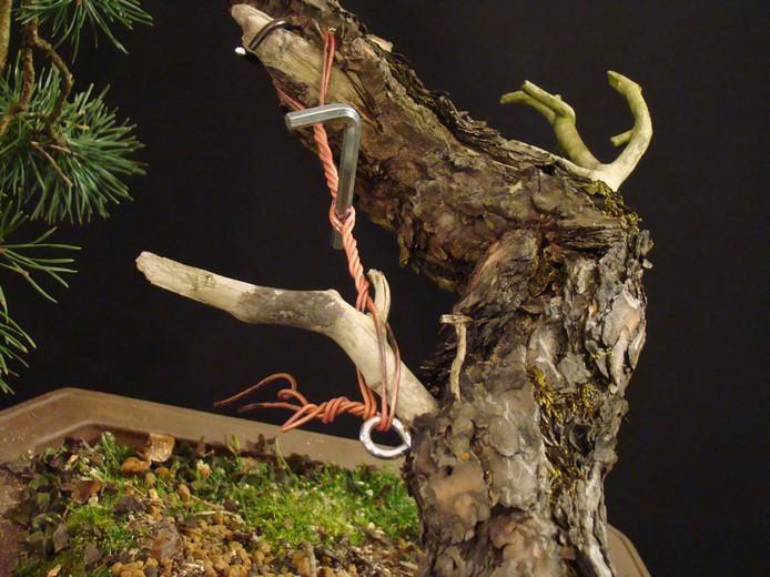 "Pinus sylvestris 2005 - ""Transformations "" Oh-24-10"