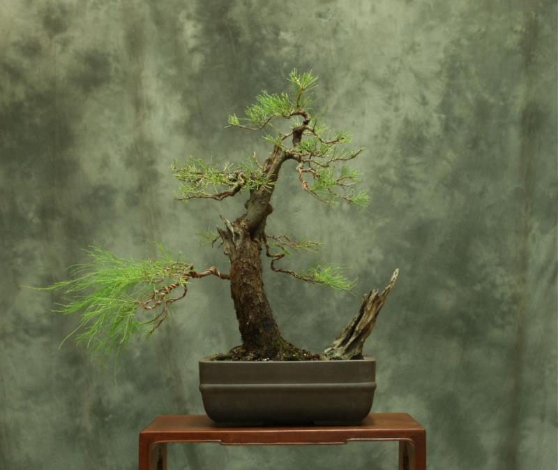Aussy Pine Update 315