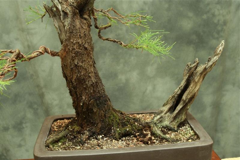 Aussy Pine Update 413