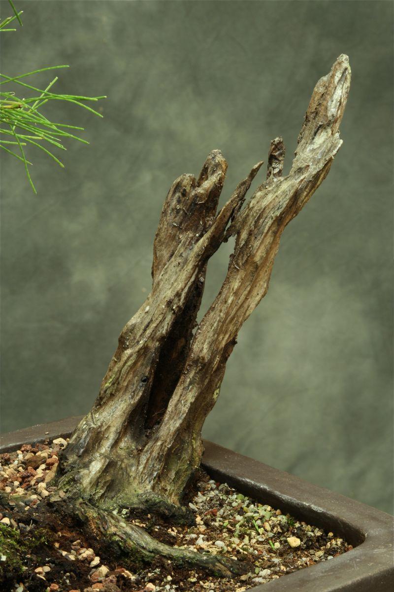 Aussy Pine Update 512