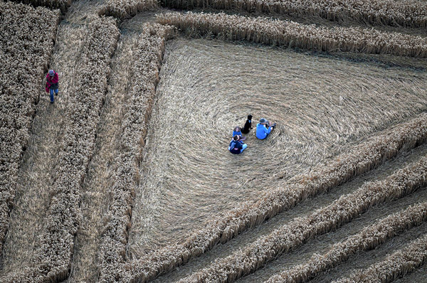 A new crop circle Whitef10