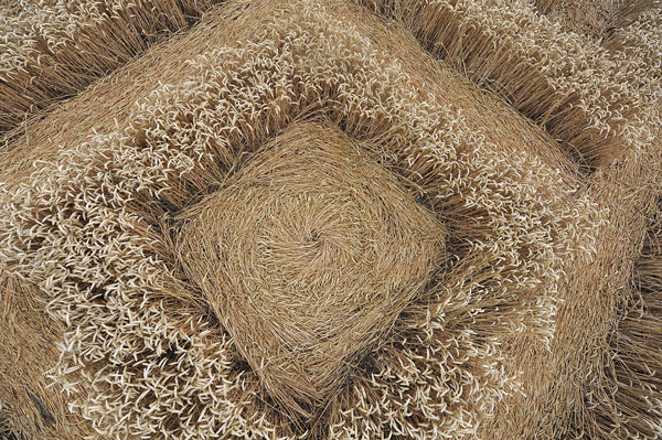 A new crop circle Whitef11