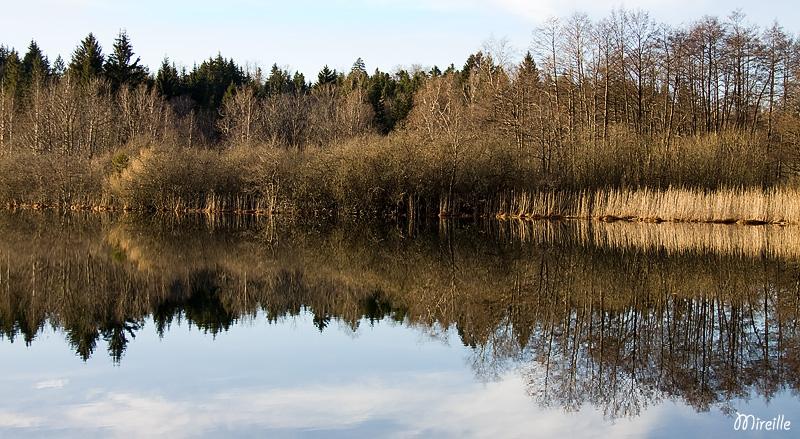 Miroir aux roseaux Img_6814