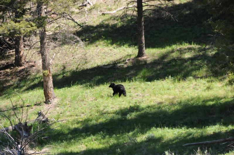 Parc National Yellowstone Dsc_7611