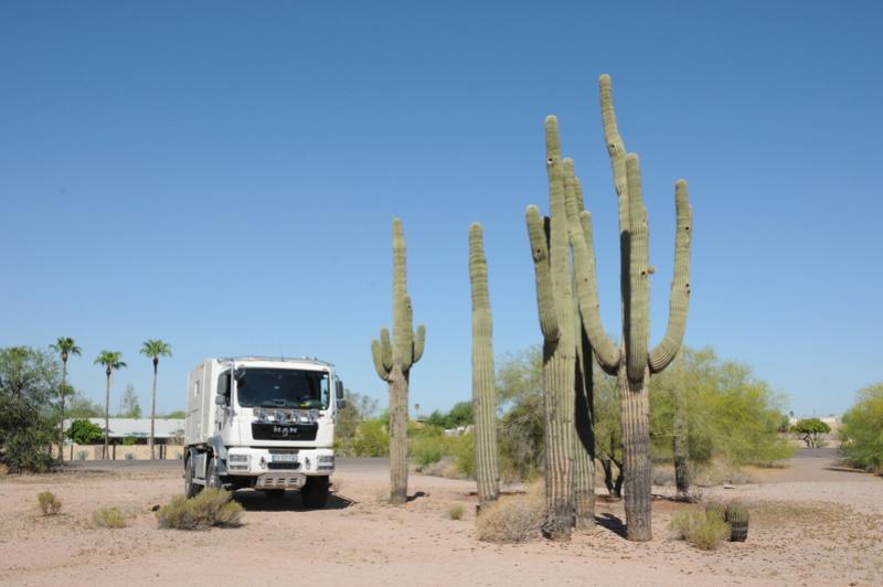 Retour au Gardiennage de Phoenix - Arizona Dsc_8810