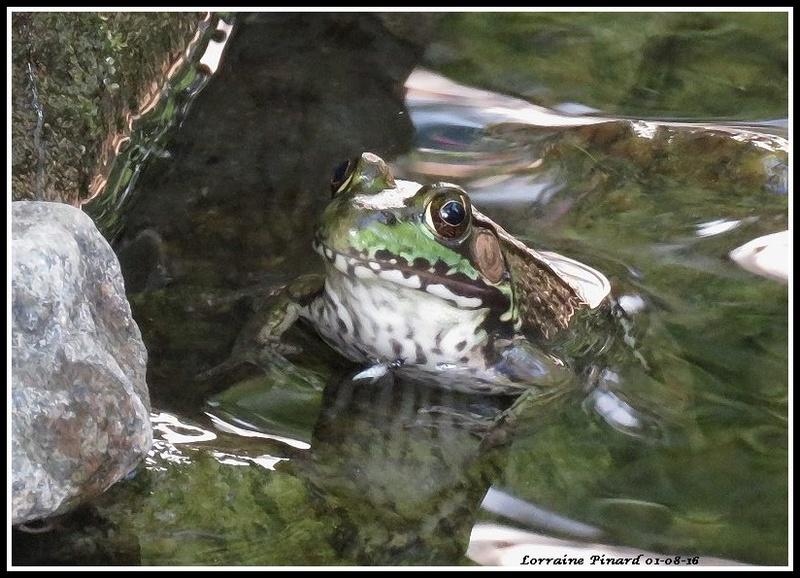 La vie dans l'étang 01-08-10