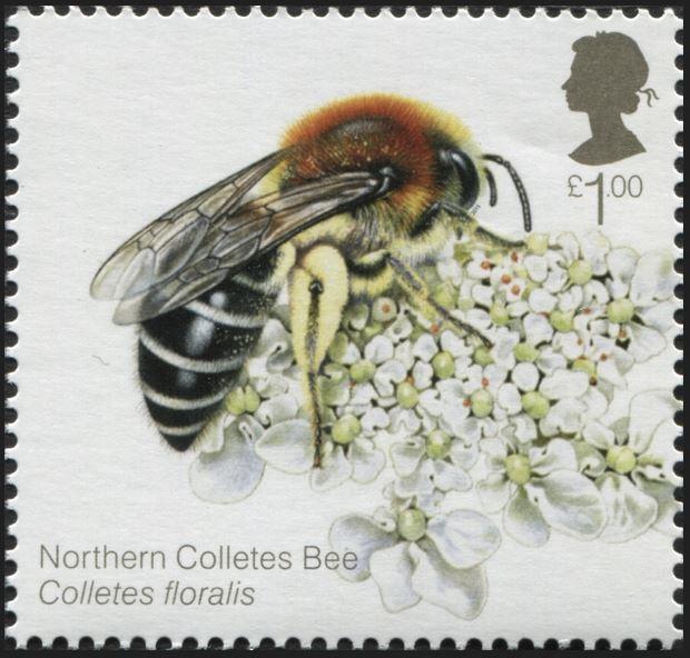 Motiv Bienen und Hummeln - Seite 3 Gb_20130
