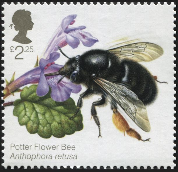 Motiv Bienen und Hummeln - Seite 3 Gb_20133