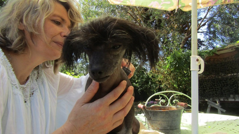 LHANI et FLAM, deux petites chiennes chinoises - ADOPTÉES 13735810