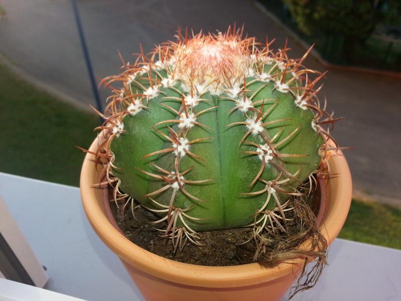 identification cactus 20130722