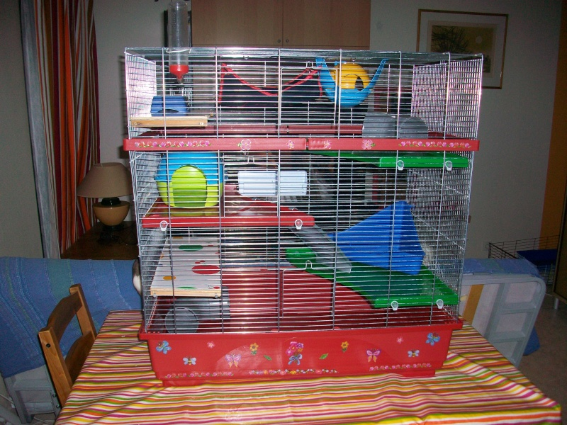 Cage 101_2010
