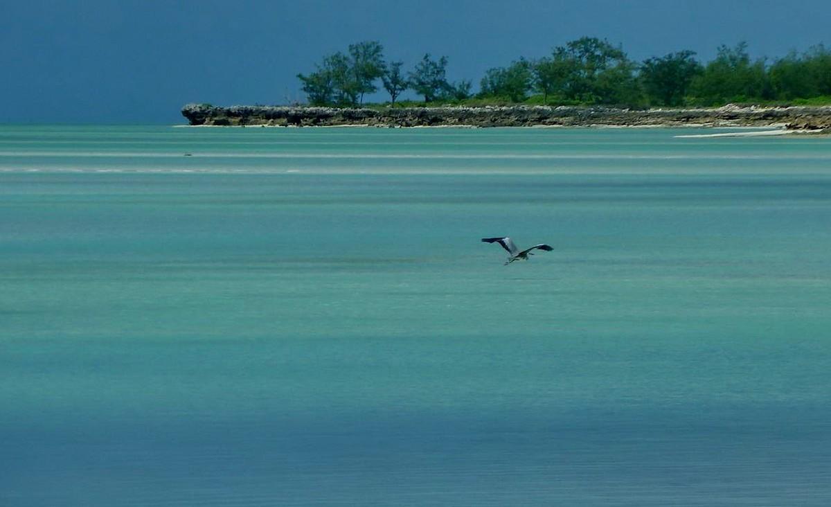 [Campagne] Iles éparses du canal du Mozambique - Page 11 118