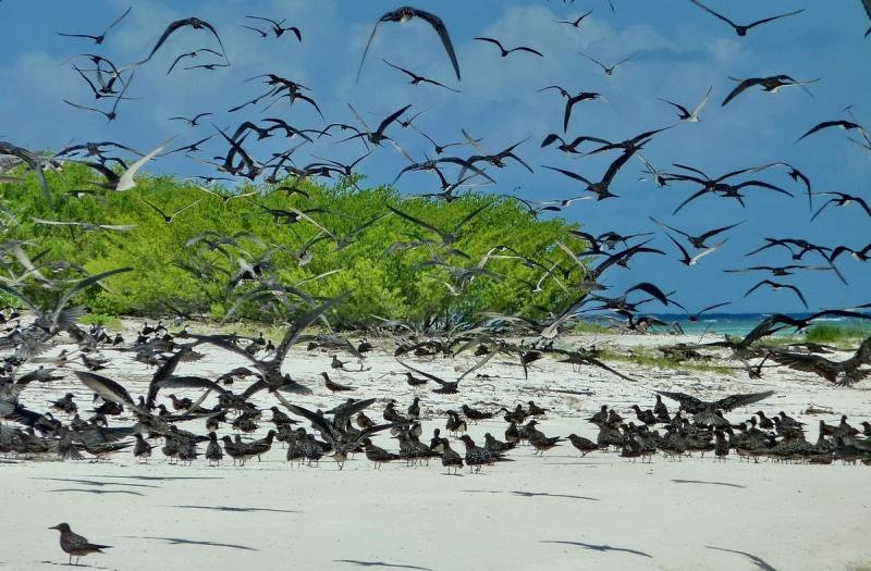 [Campagne] Iles éparses du canal du Mozambique - Page 11 412