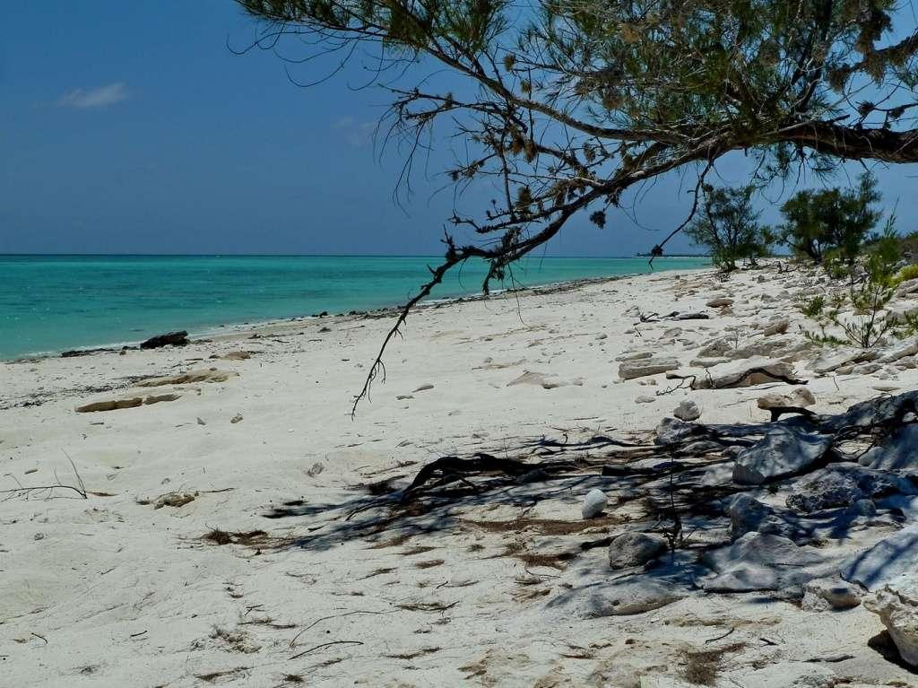 [Campagne] Iles éparses du canal du Mozambique - Page 11 420