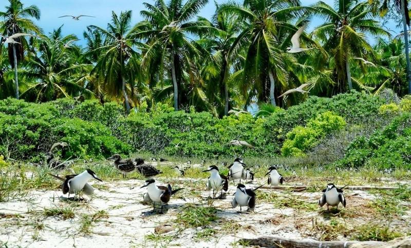 [Campagne] Iles éparses du canal du Mozambique - Page 11 610