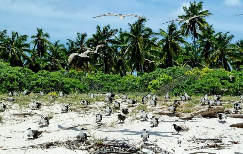 [Campagne] Iles éparses du canal du Mozambique - Page 11 710