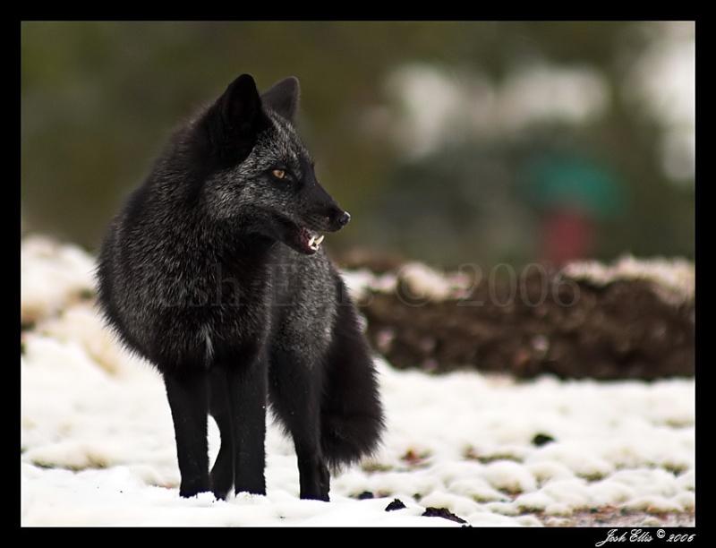 A Coeur Sauvage, rien n'est impossible... Black_10
