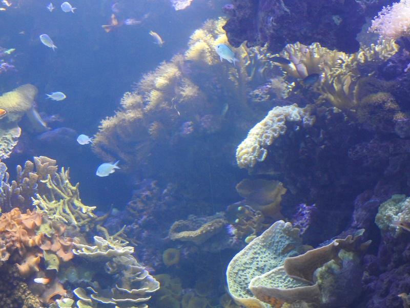 L'Oceanogràfic - valence Dscn0610