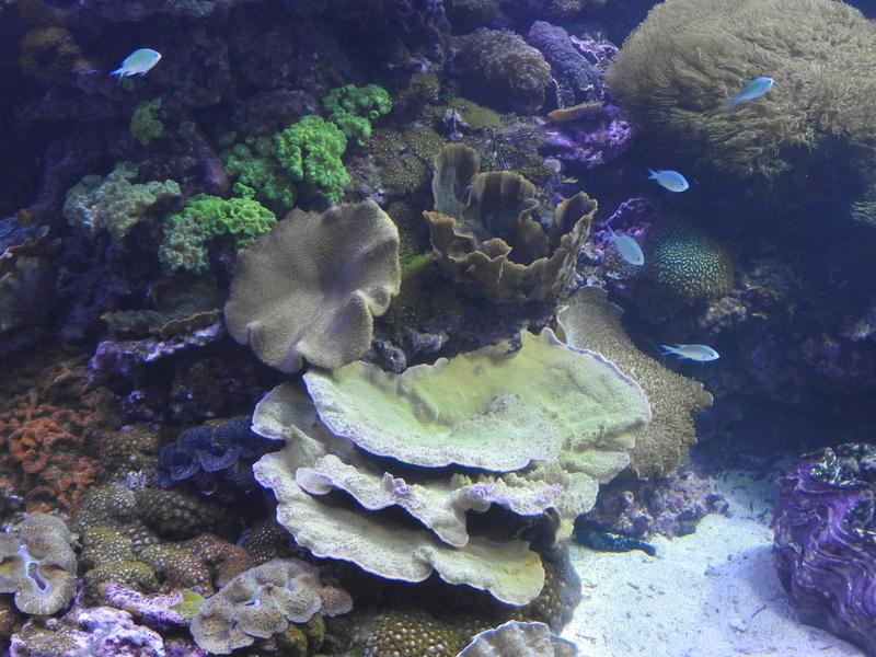 L'Oceanogràfic - valence Dscn0611