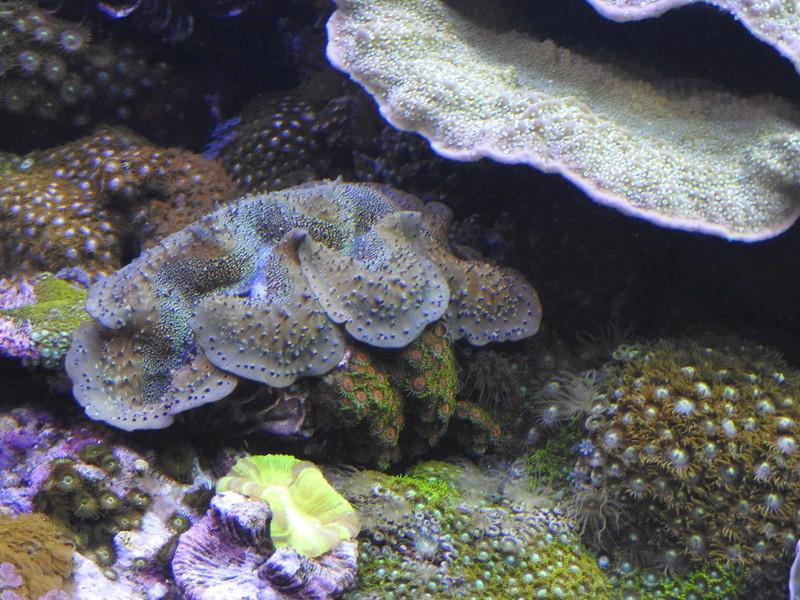 L'Oceanogràfic - valence Dscn0613