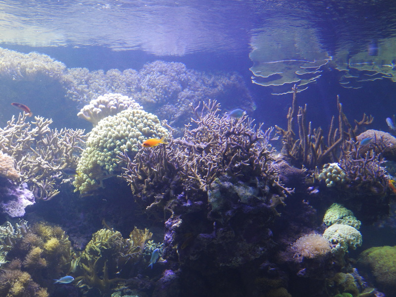 L'Oceanogràfic - valence Dscn0623