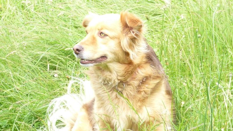 Post les chiens de Chantal P1180013
