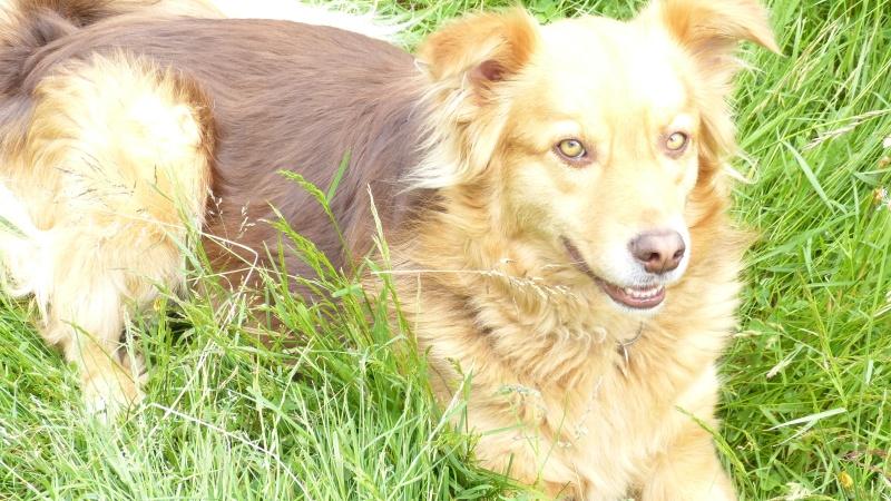 Post les chiens de Chantal P1180114