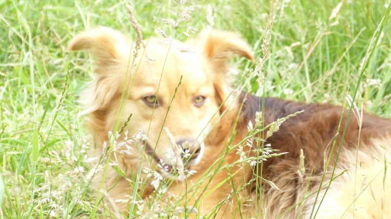 Post les chiens de Chantal P1180115