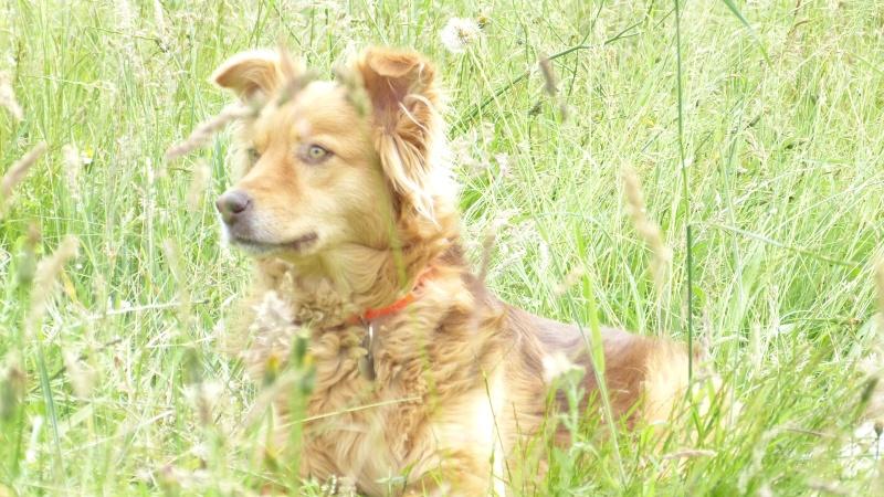 Post les chiens de Chantal P1180210