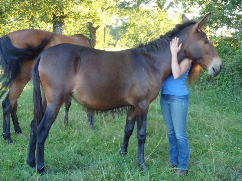 FALBALA - ONC mule née en 2015 - adoptée en juillet 2016 par Thierry - Page 2 Falbal12