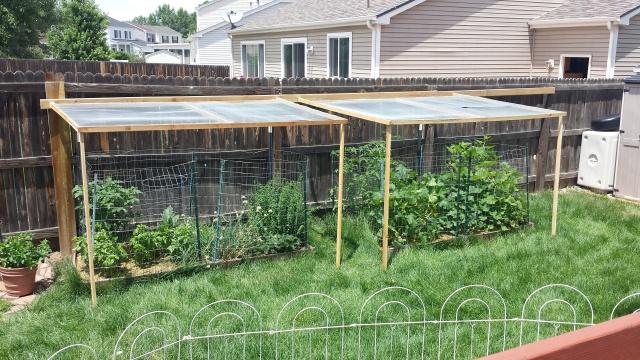 Jenn's Gardening Thread 2016 20160710