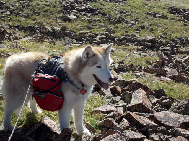 Hiking with Dogs~ Mt. Boreas, 13,082ft~Failed Summit Dscn3712