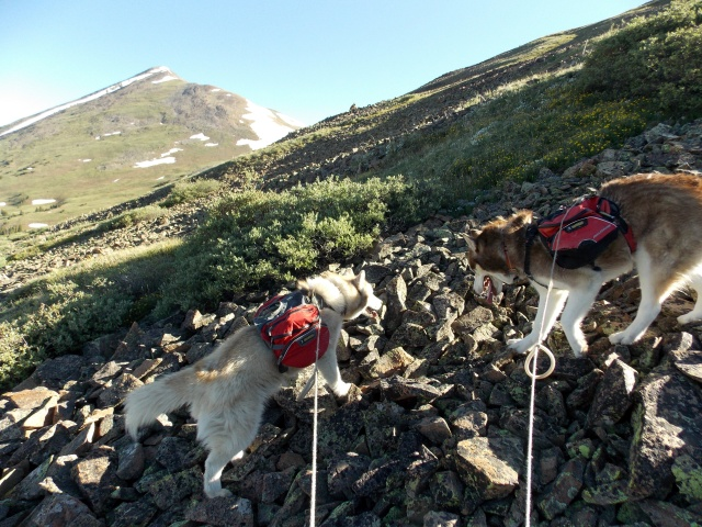 Hiking with Dogs~ Mt. Boreas, 13,082ft~Failed Summit Dscn3713
