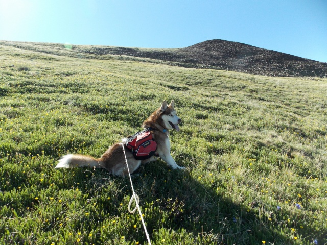 Hiking with Dogs~ Mt. Boreas, 13,082ft~Failed Summit Dscn3714