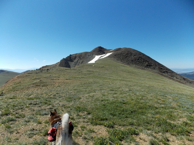 Hiking with Dogs~ Mt. Boreas, 13,082ft~Failed Summit Dscn3715