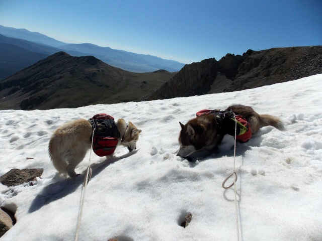 Hiking with Dogs~ Mt. Boreas, 13,082ft~Failed Summit Dscn3716