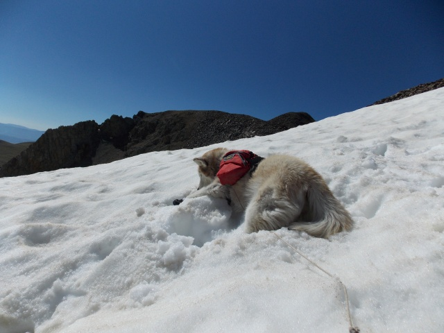 Hiking with Dogs~ Mt. Boreas, 13,082ft~Failed Summit Dscn3717