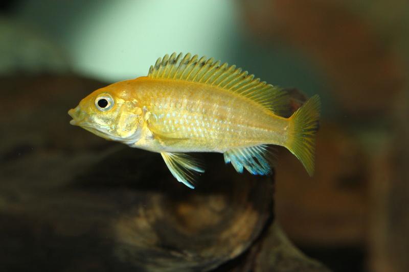 Ce post pour des photos marrantes de vos aquariums Img_4112