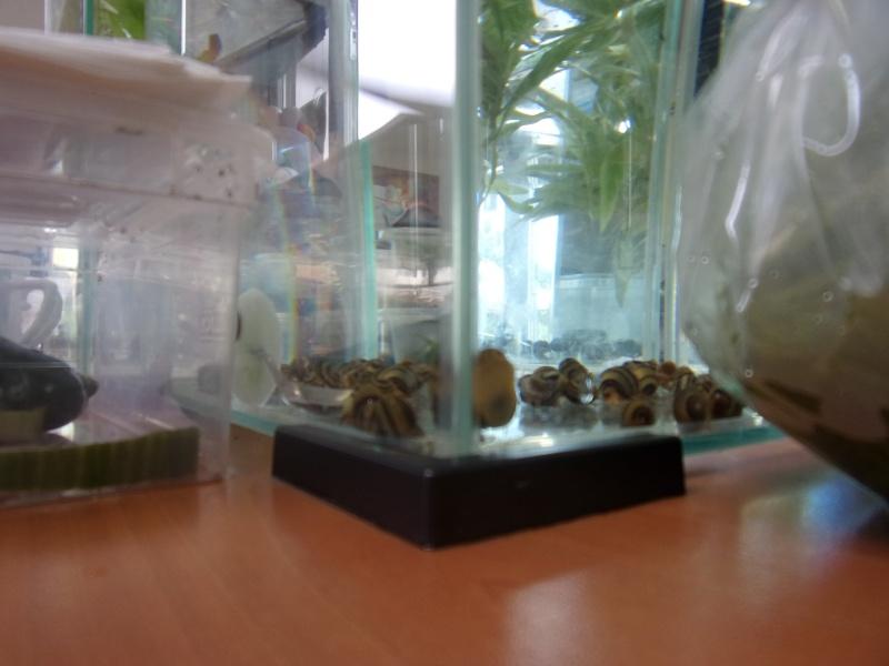1er bourse aux plantes aquatiques le 19 juin 100_0018
