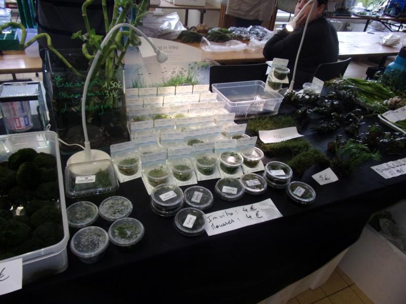 1er bourse aux plantes aquatiques le 19 juin 100_0021